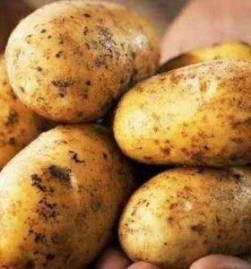 Продам картошку деревенскую вкусную большие мешки