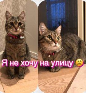 Кошке нужен новый дом!
