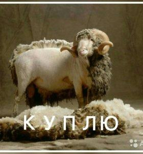 КУПИМ ШЕРСТЬ ОВЧИНА