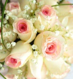 Розы 28 сортов.. Продажа, доставка.