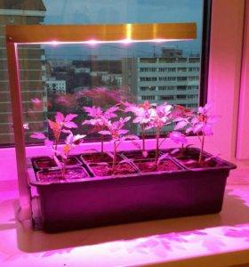 Лампа для растений и рассады, фитолампа.