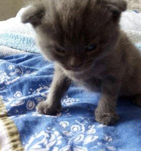 Продам котёнка (девочка)