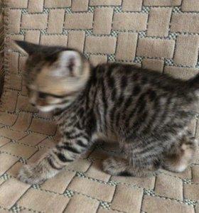 Продам очаровательных котят!!!!