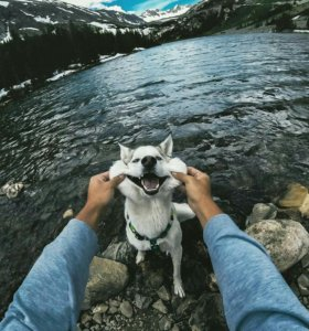 Выгуляю вашу собаку НЕ ДОРОГО!