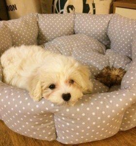 Лежаки и матрасики для собак и кошек