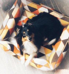 Лежаки и матрасики для кошек и собак