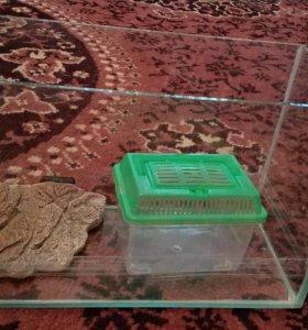 Для черепашки аквариум
