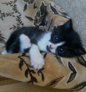 Отдам в добрые руки прелестных,игривых котят.