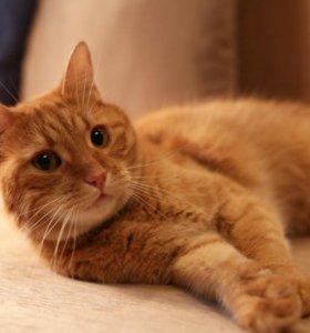 Кастрированный котик