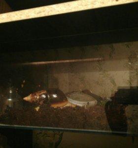 Ахатины с аквариумом