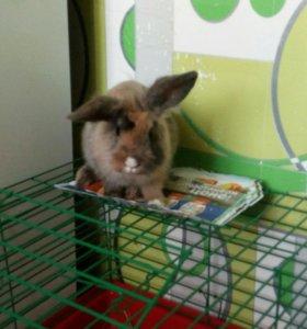 Кролик декоративный с клеткой.