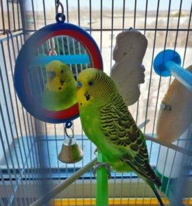 Попугай + клетка