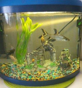 Аквариум с рыбками, срочно