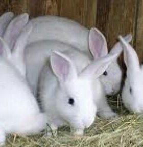 Продаётся семья кроликов