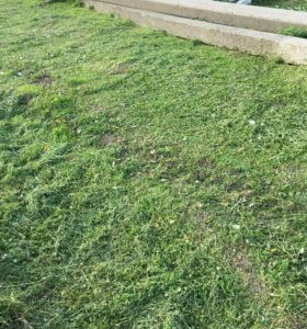 Покос травы.
