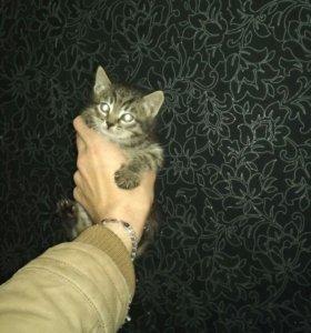 Срочно пристраивается Киса в новый дом!!!