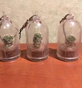 Живой кактус брелок