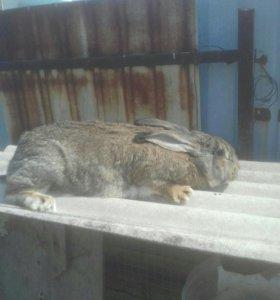 Продам маленьких кроликов