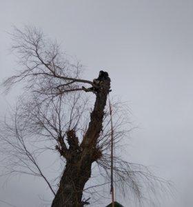 Спил , кронирование деревьев .
