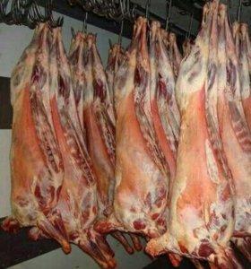 Мясо баранина