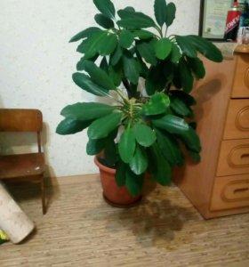Комнатное растение с кашпо