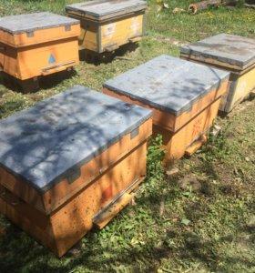 Продажа пчёл.