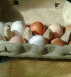 Домашние  свойские яйца