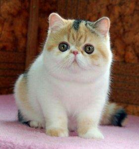 Кошка длинношерстая.