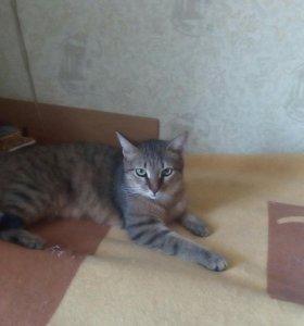 Кошка молодая Зайка
