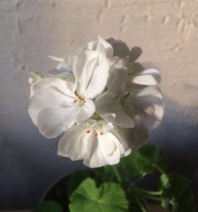 Красивый цветочек в кашпо Икеа