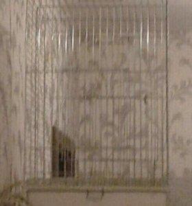 Клетка для среднего попугая.
