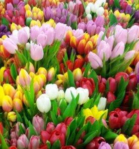 Луковицы тюльпанов,нарцисов, гладиолусов