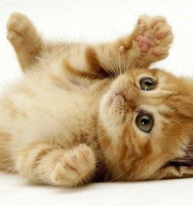 Возьму котенка