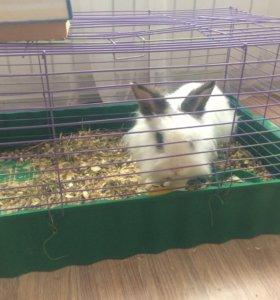 Кролик,Самка