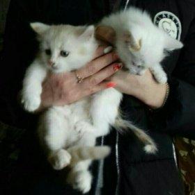 Белые комочки к счастью!