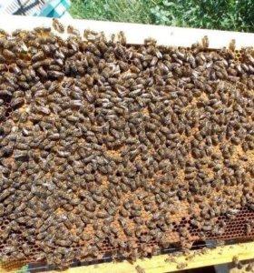 Продаются пчелопакеты из четырёх рамок с раскладом