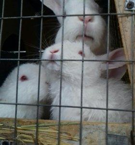 крольчата белого великана 1 месяц