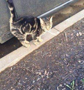 Очаровательная кошка ищет дом и своего человека!