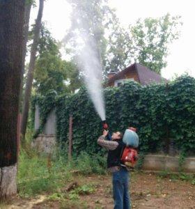 Профессиональное лечение деревьев.