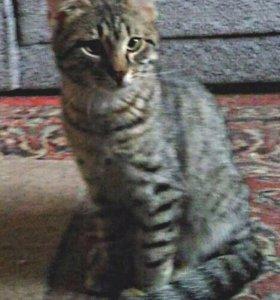 Котёнок Афоня ищет дом