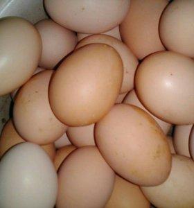 Яйцо куринное.