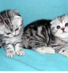 Котятки.