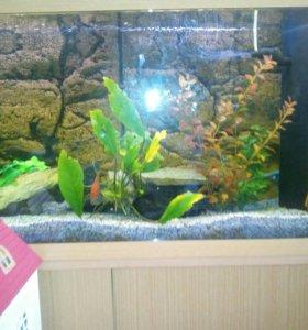 Продаю рыбок с аквариумом и тумбой под него.СРОЧНО