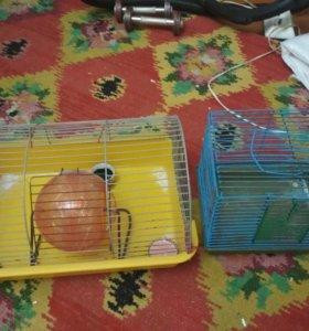 Две клетки