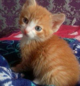 Котёнок рыжий