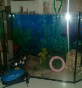 Аквариум для рыбок с компрессором