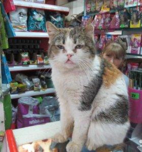 Кошка Рая ищет дом!
