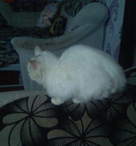 Кот безпородистый