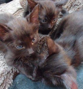 милые чёрные котики