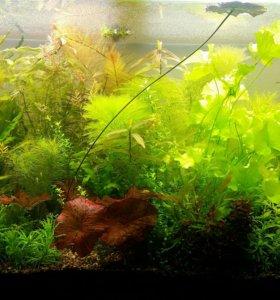 Аквариумные растения из своего аквариума.